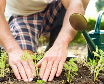 Close Up Of Man Planting Seedlings In Ground On Allotment By Himself
